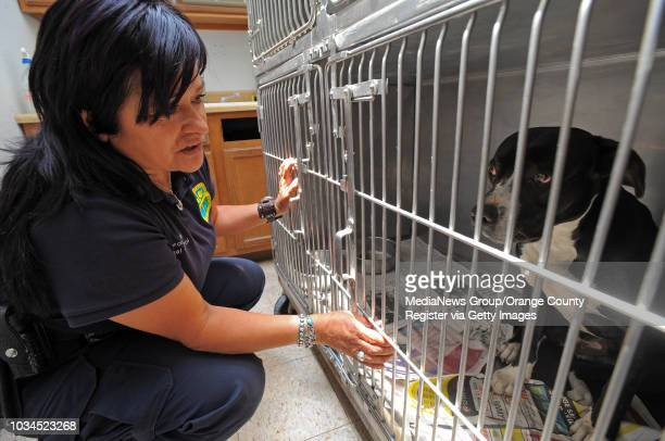 HAWTHORNE 05/25/10 Hawthorne animal control officer Helen Coronel checks on the condition of a female pit bull mix named Mary Jane whose owner was...