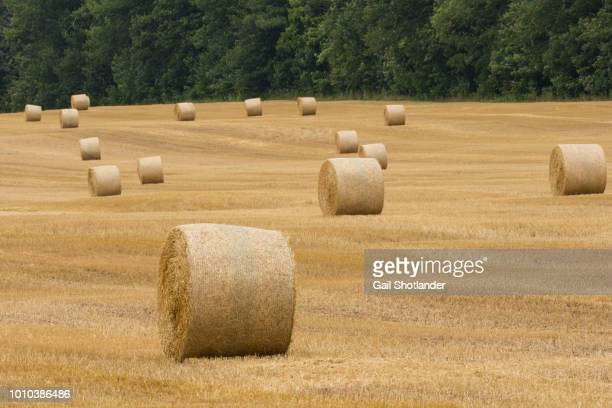 Hay Bails in the Field