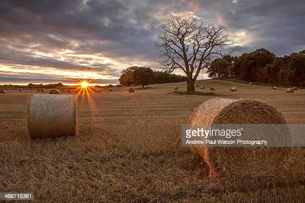 hay bale dawn - モーレイ湾 ストックフォトと画像