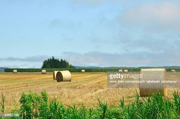 Hay bale on Obihiro field