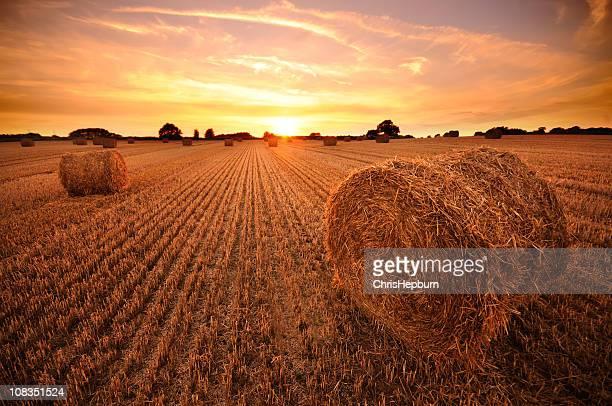 Hay Bale au coucher du soleil
