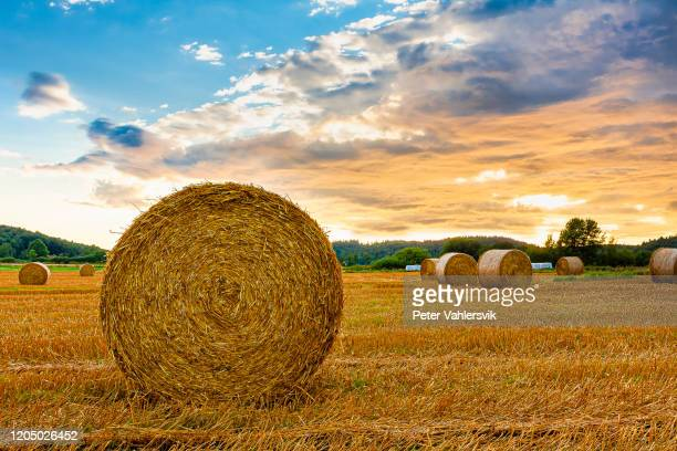 hay bale sunset - harvesting stock pictures, royalty-free photos & images