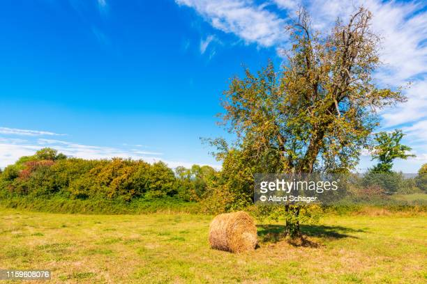 hay bale under tree on countryside in normandy france - sarthe stock pictures, royalty-free photos & images
