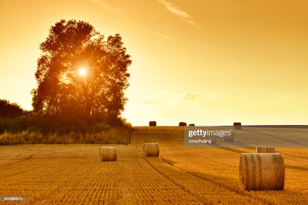 Hay Bales and Field Stubble in Golden Sunset : Stock Photo