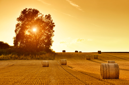 Hay Bales and Field Stubble in Golden Sunset 945980074
