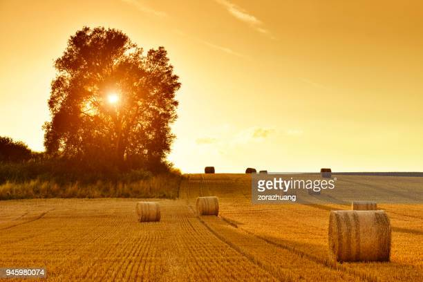 Hay Bales and Field Stubble in Golden Sunset