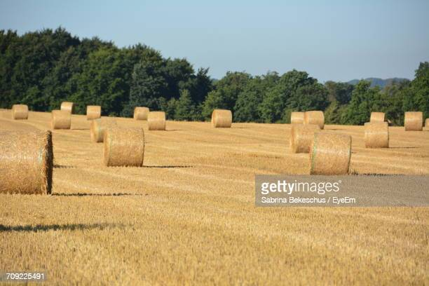Hay Bales At Agricultural Field Against Clear Sky