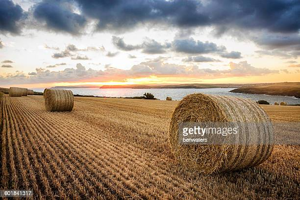 Hay bales in a field at sunset, Cornwall, England, UK