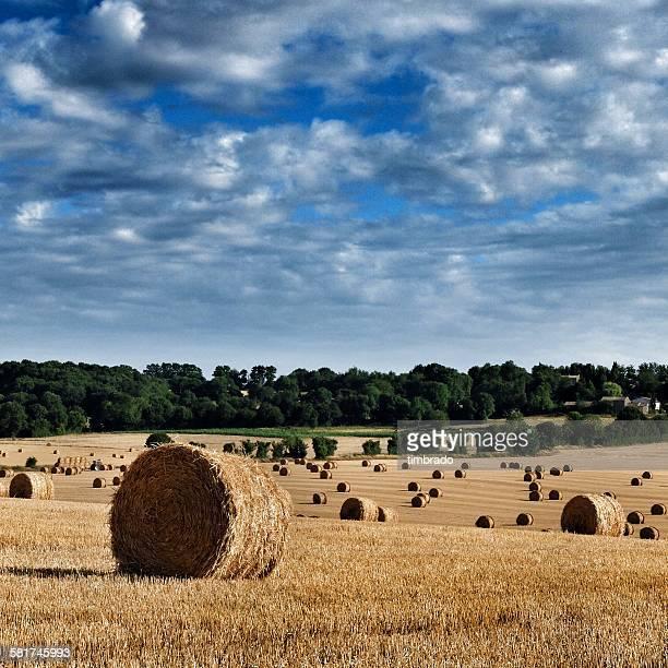 hay bales in a field, niort, poitou-charentes, france - シャラント ストックフォトと画像
