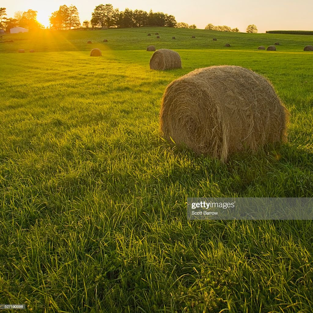 Hay bales in a field : Foto stock