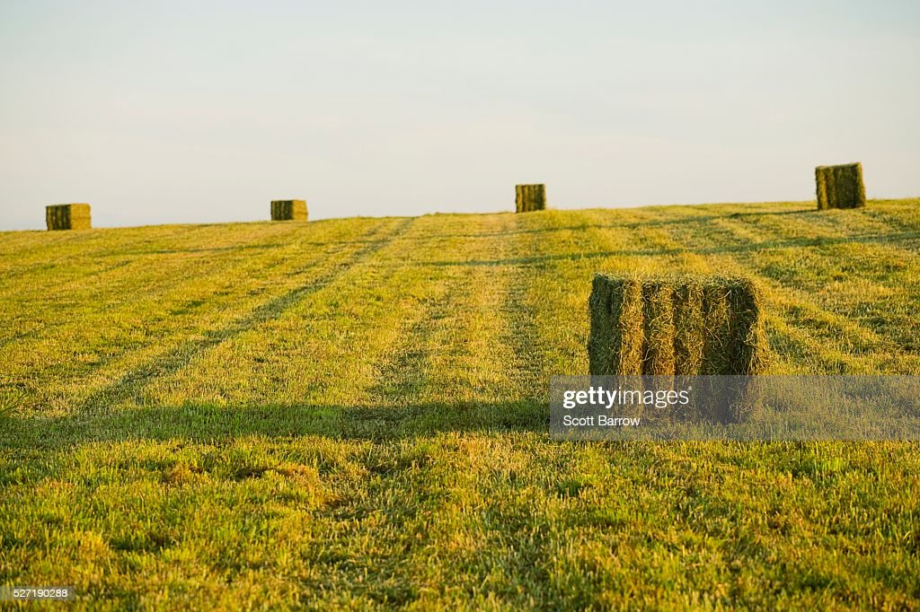 Hay bales in a field : Foto de stock