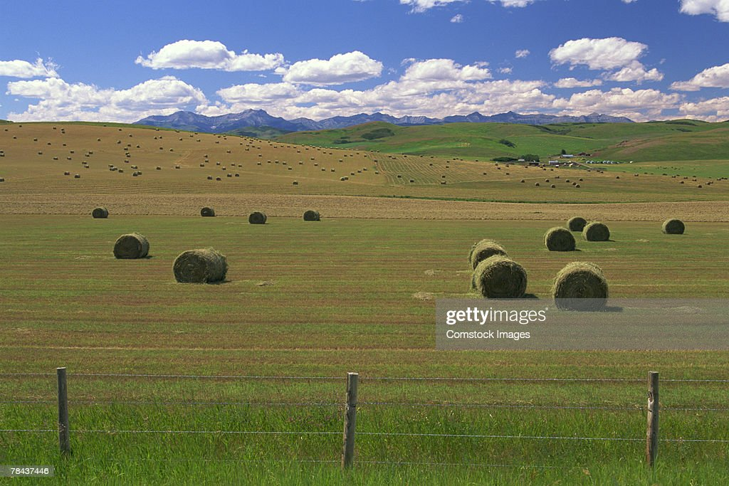 Hay bales in a field : Stockfoto