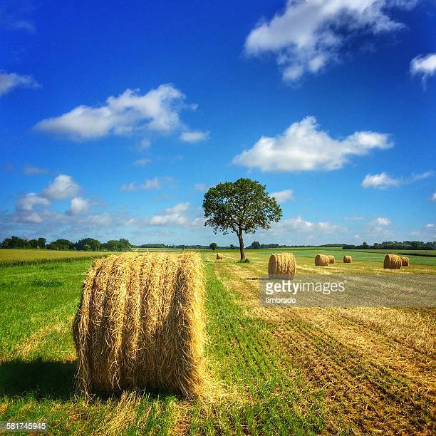 Hay bales in a field, Poitou-Charentes, France