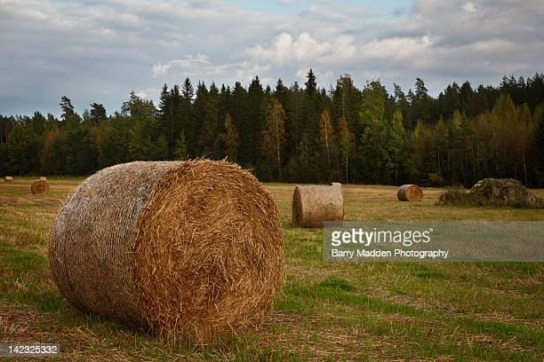 hay bales in field - ラッペーンランタ ストックフォトと画像