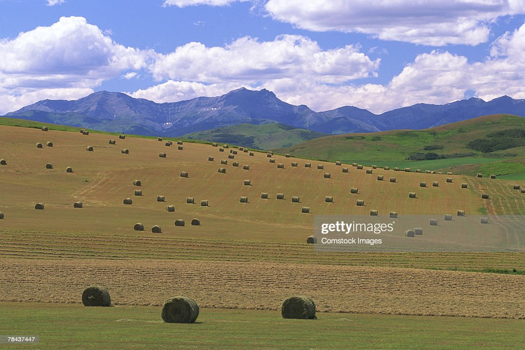 Hay bales in field : Stock Photo