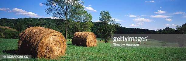 hay bales in green field - timothy hearsum stock-fotos und bilder