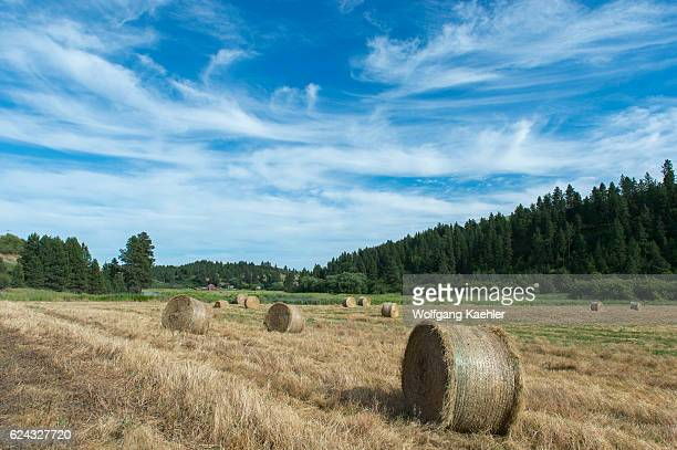 Hay bales in the Union Flat Creek valley in Whitman County in the Palouse Washington State USA with a farm in the background