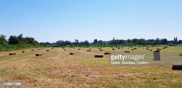 hay bales on field against clear sky - bedarrides photos et images de collection