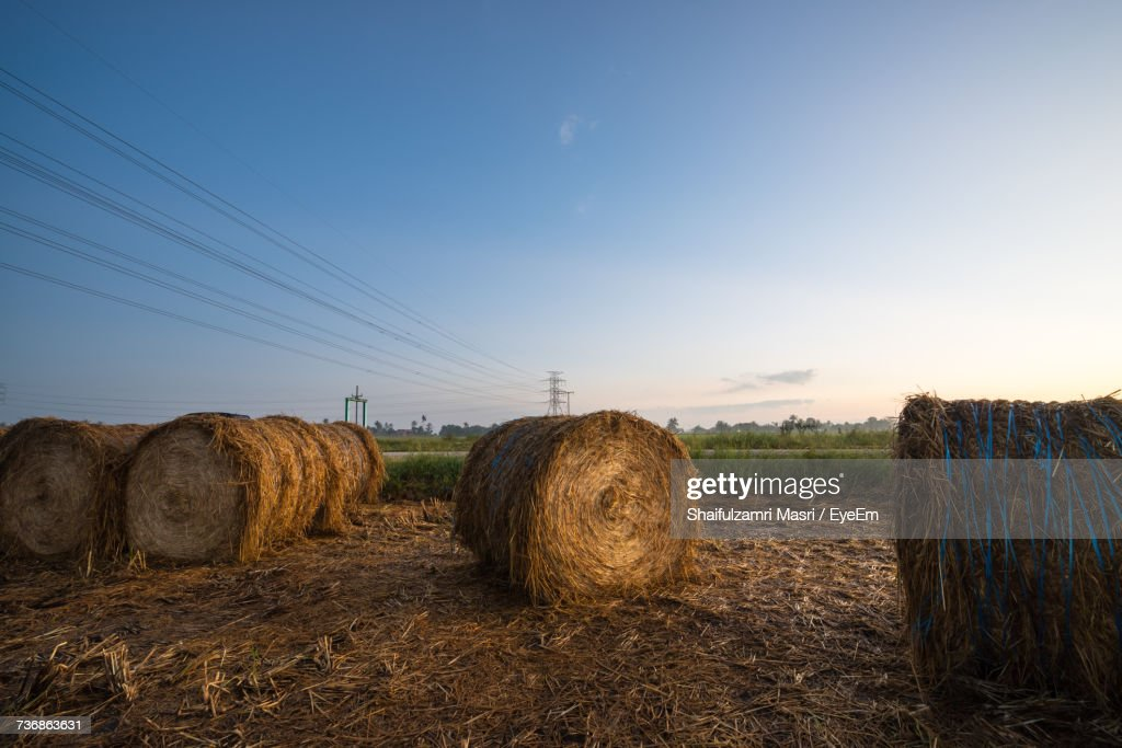 Hay Bales On Field Against Clear Sky : Stock Photo