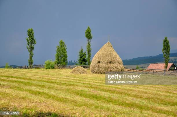 hay bales on field against clear sky - florin seitan stock pictures, royalty-free photos & images