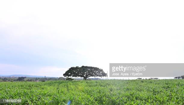 hay bales on field against sky - jose ayala stock pictures, royalty-free photos & images
