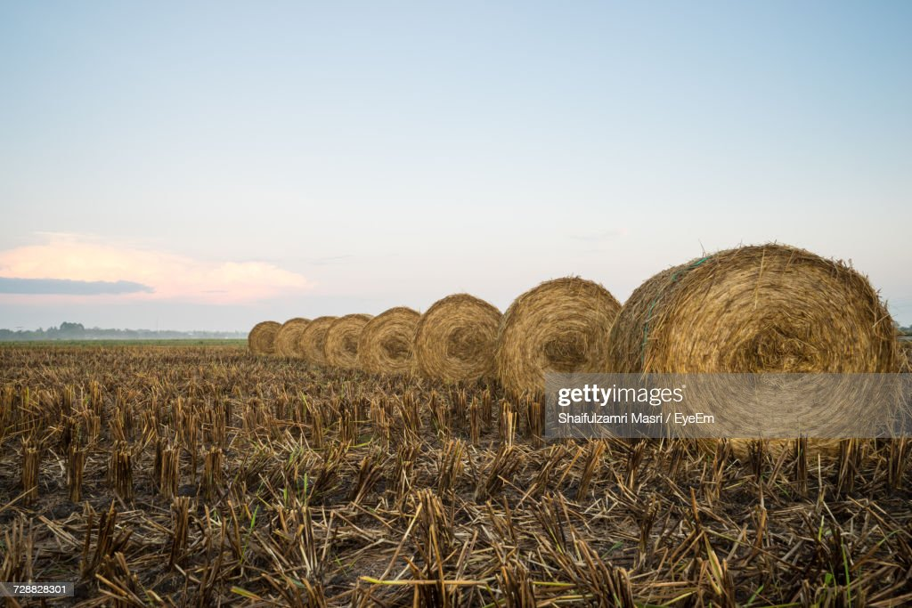 Hay Bales On Field Against Sky : Stock Photo