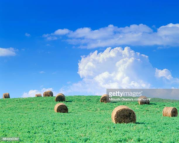 Hay bales on hill in summer