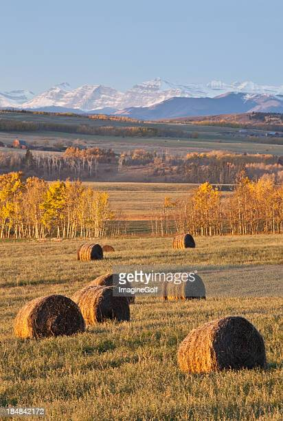 hay bales on the prairie in fall - foothills stock pictures, royalty-free photos & images