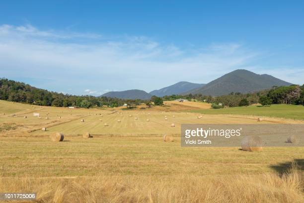 hay bales - tamworth australia stock pictures, royalty-free photos & images