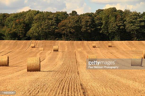 hay bales - doncaster stock pictures, royalty-free photos & images