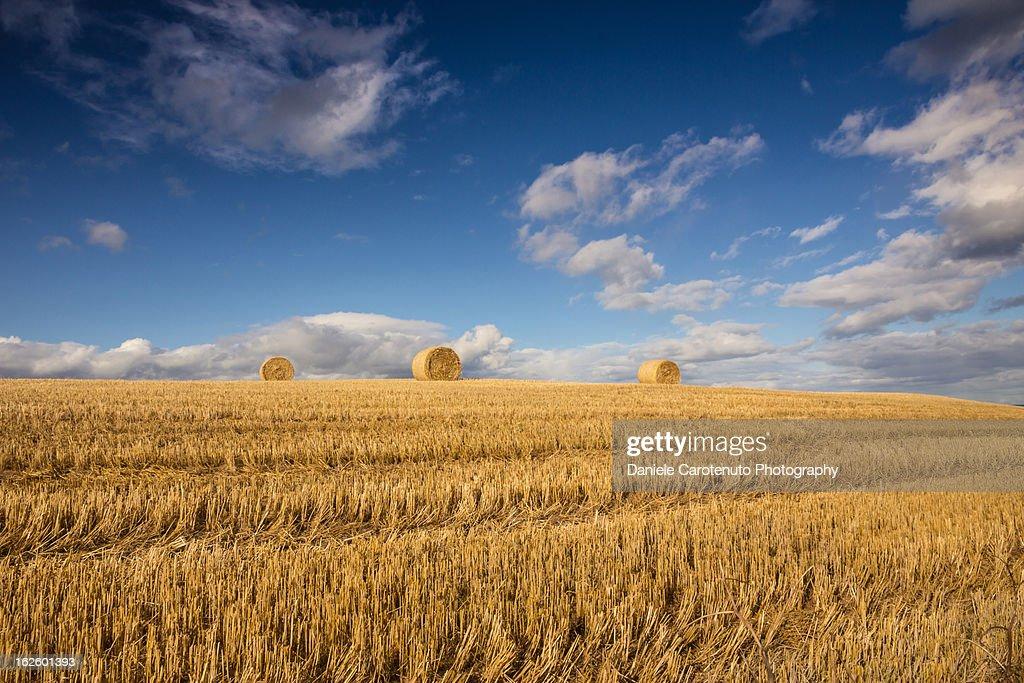 Hay bales : Stock Photo
