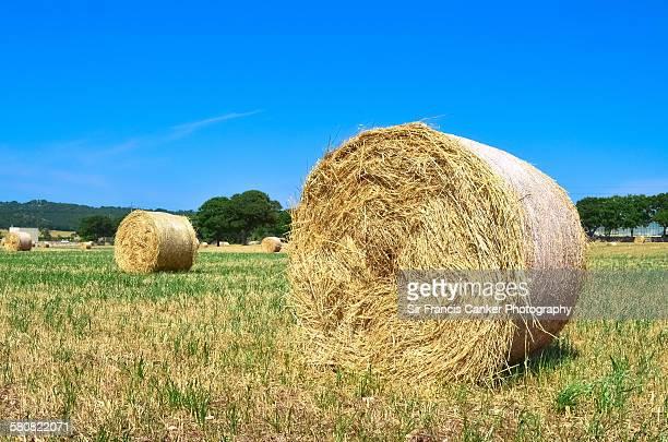 Hay bales under sun of Apulia, Italy