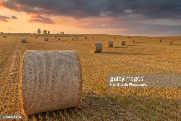 hay bales, yorkshire, england - growth stock pictures, royalty-free photos & images