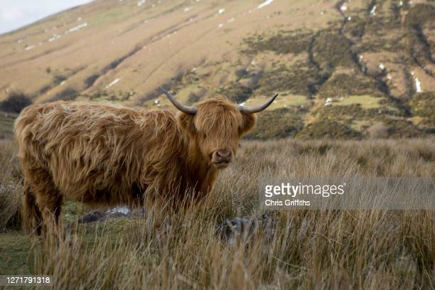 hay bluff, welsh marches, united kingdom - local landmark stock pictures, royalty-free photos & images