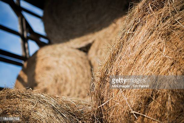 Hay, dried grass and animal fodder, bales stacked in a barn on an organic farm.