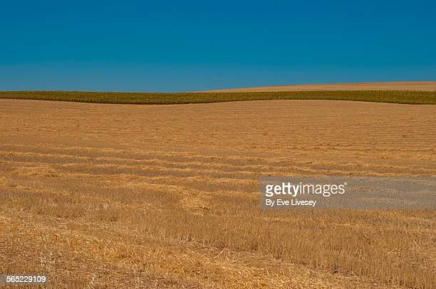 hay field lines - castilla la mancha fotografías e imágenes de stock