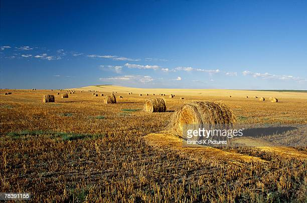 hay field, north dakota - north dakota stock pictures, royalty-free photos & images