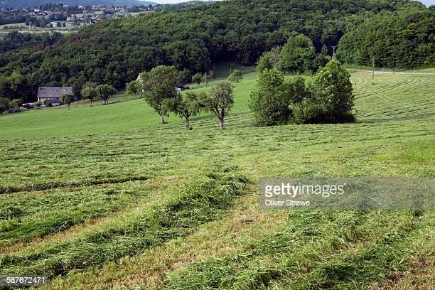 Hay Making, La Greubaz