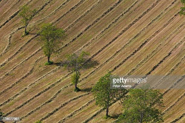 hay making, marche, italy - 斜めから見た図 ストックフォトと画像