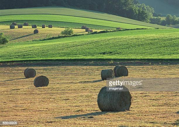 hay rolls - 九月 ストックフォトと画像