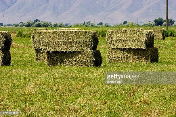 Hay, Stacked Large Bales.