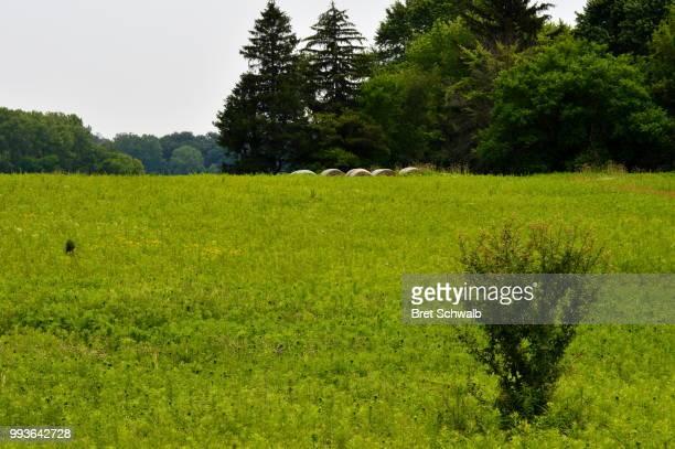 Haybales hiding in Grass
