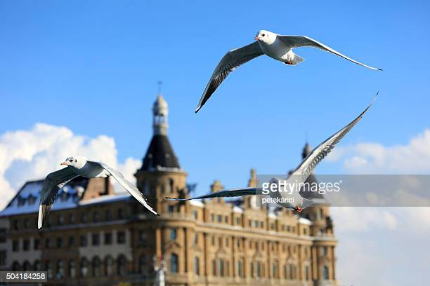 haydarpasa main railroad station in kadikoy istanbul - haydarpasa stock photos and pictures