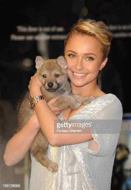 Hayden Panettiere attends gala screening of 'Alpha Omega' at BFI Southbank on October 10 2010 in London England