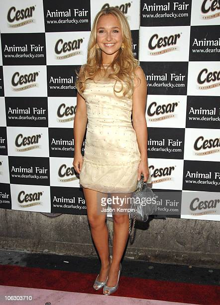 Hayden Panettiere during Animal Fair's 8th Annual Paws for Style June 11 2007 at Arena in New York City New York United States