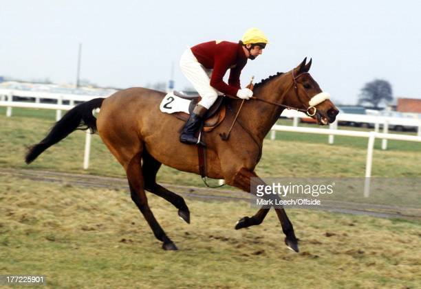 Haydock Park Red Rum goes down to the start with jockey Ron Barry up They finished in 4th place the last completed race for the famous horse
