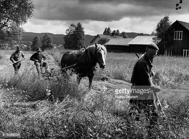 Haymaking in Sweden.   Location: Alvdalen, Sweden.