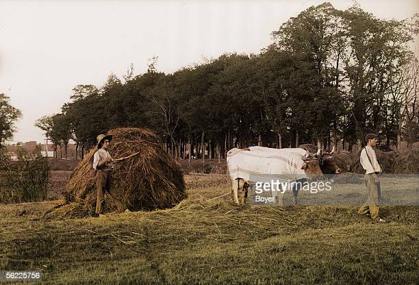 Haymaking in the Basque Country, sleigh. France, about 1908. Colourized picture.