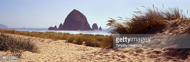 haystack rock with beach grasses - timothy hearsum stock-fotos und bilder