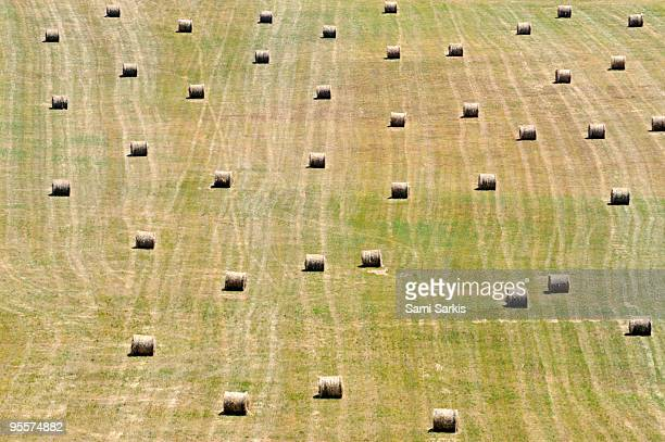 Haystacks bale aligned in field